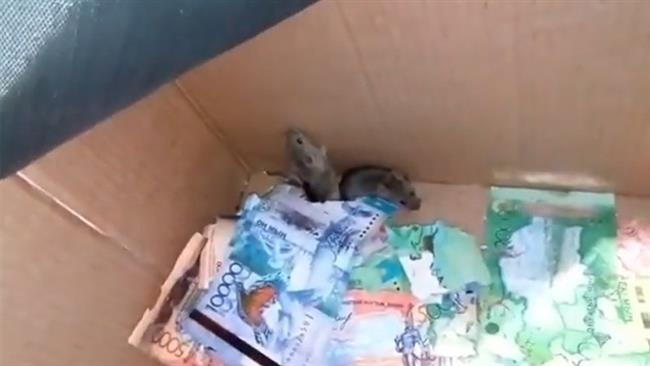 Mice crawl into ATM and chew through cash in Astana